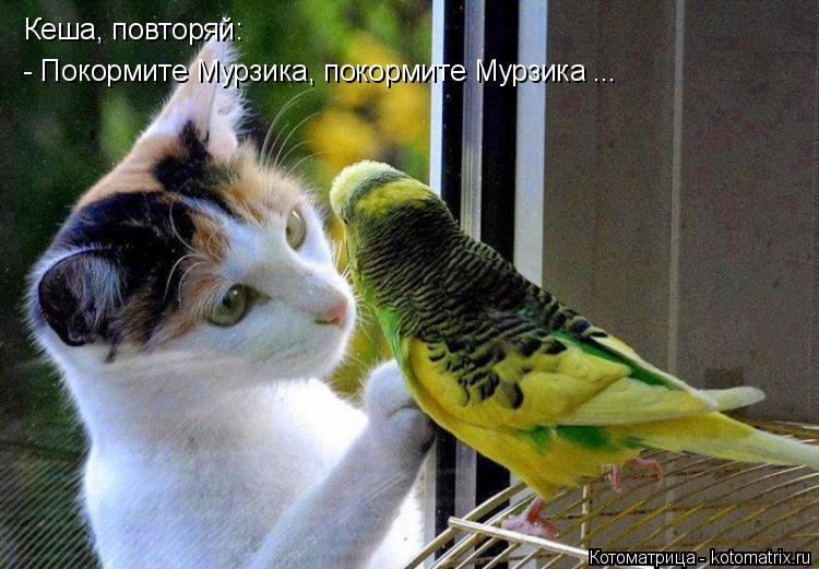 Котоматрица: Кеша, повторяй:  - Покормите Мурзика, покормите Мурзика ...