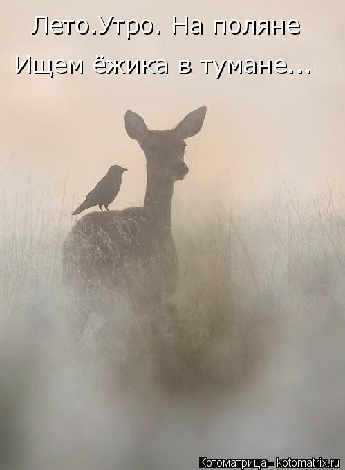 Котоматрица: Лето.Утро. На поляне Ищем ёжика в тумане...