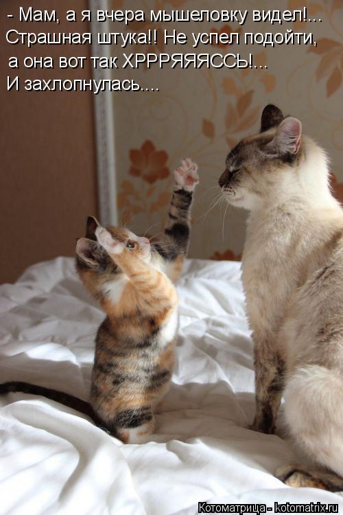 Котоматрица: - Мам, а я вчера мышеловку видел!... Страшная штука!! Не успел подойти,   И захлопнулась.... а она вот так ХРРРЯЯЯССЬ!...