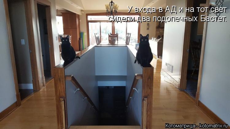 Котоматрица: У входа в АД и на тот свет сидели два подопечных Бастет.