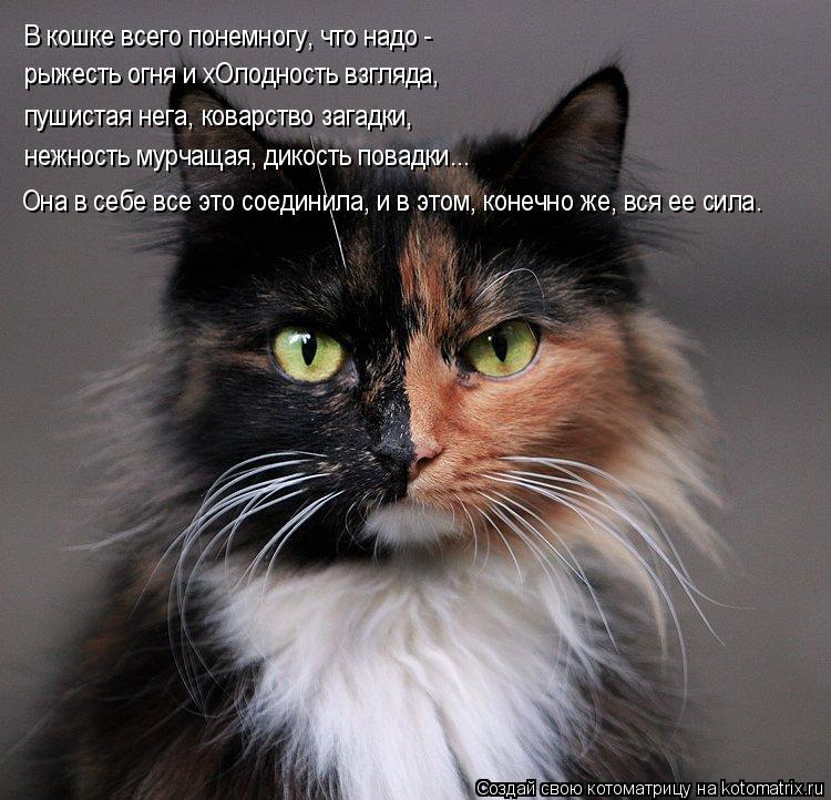 Котоматрица: В кошке всего понемногу, что надо - рыжесть огня и хОлодность взгляда, пушистая нега, коварство загадки, нежность мурчащая, дикость повадки..