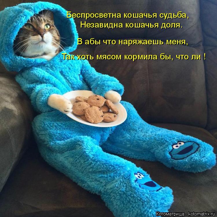 Котоматрица: Беспросветна кошачья судьба, Незавидна кошачья доля. В абы что наряжаешь меня, Так хоть мясом кормила бы, что ли !