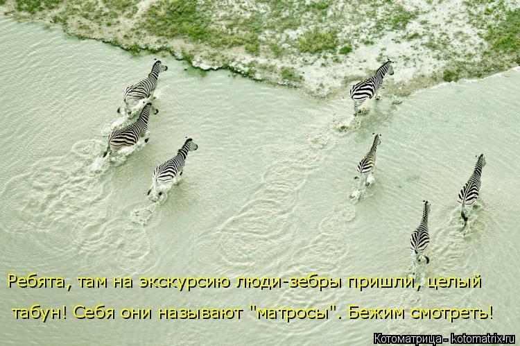 """Котоматрица: Ребята, там на экскурсию люди-зебры пришли, целый табун! Себя они называют """"матросы"""". Бежим смотреть!"""