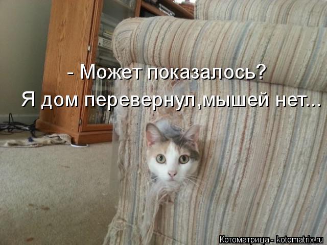 Котоматрица: - Может показалось? Я дом перевернул,мышей нет...