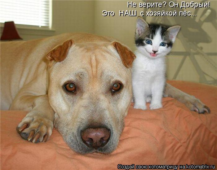 Котоматрица: Не верите? Он Добрый! Это  НАШ  с хозяйкой пёс...