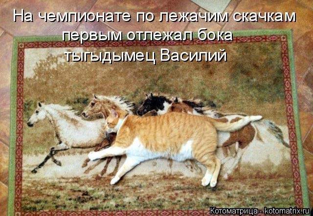 Котоматрица: На чемпионате по лежачим скачкам первым отлежал бока  тыгыдымец Василий
