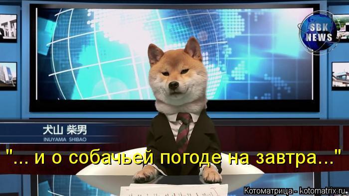 "Котоматрица: ""... и о собачьей погоде на завтра..."""