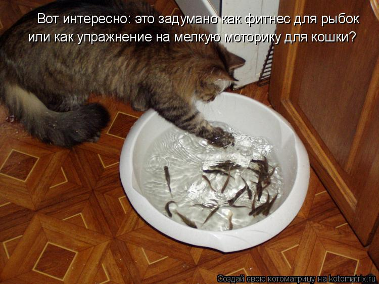 Котоматрица: Вот интересно: это задумано как фитнес для рыбок или как упражнение на мелкую моторику для кошки?