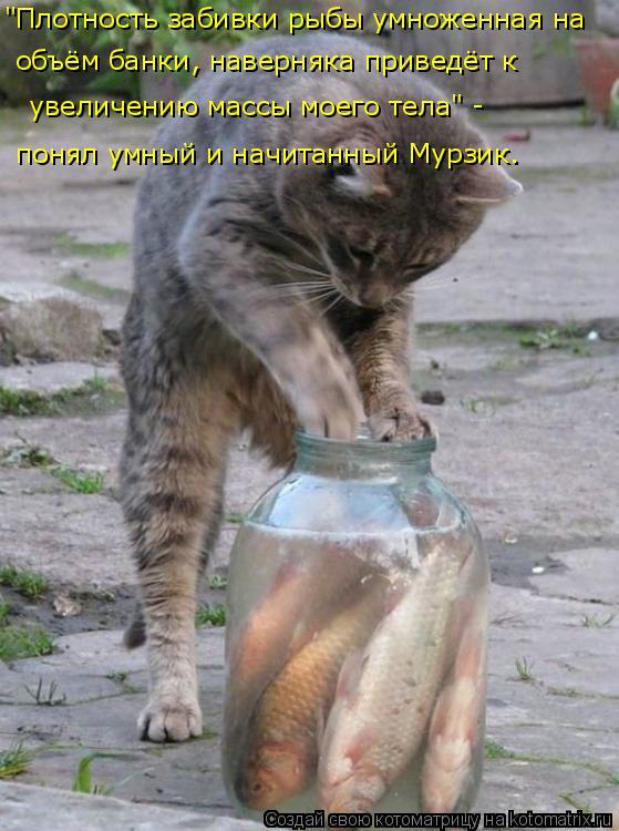"""Котоматрица: """"Плотность забивки рыбы умноженная на  объём банки, наверняка приведёт к  увеличению массы моего тела"""" -  понял умный и начитанный Мурзик."""