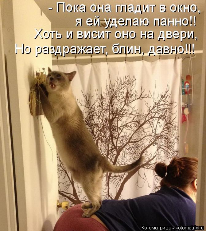 Котоматрица: - Пока она гладит в окно, я ей уделаю панно!! Хоть и висит оно на двери, Но раздражает, блин, давно!!!