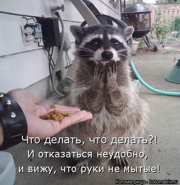 Котоматрица: Что делать, что делать?! И отказаться неудобно,  и вижу, что руки не мытые!