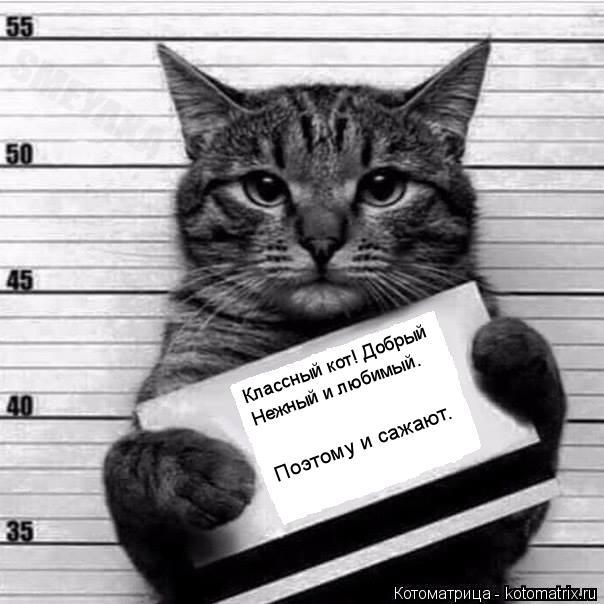 Котоматрица: Классный кот! Добрый  Нежный и любимый. Поэтому и сажают.