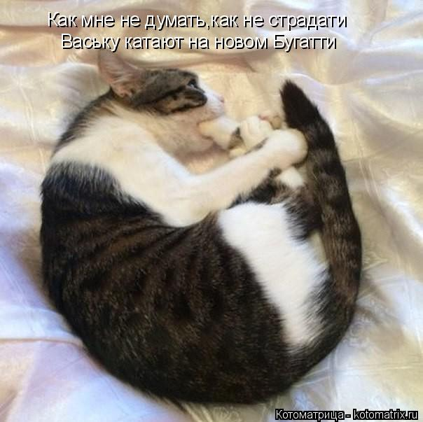 Котоматрица: Как мне не думать,как не страдати Ваську катают на новом Бугатти