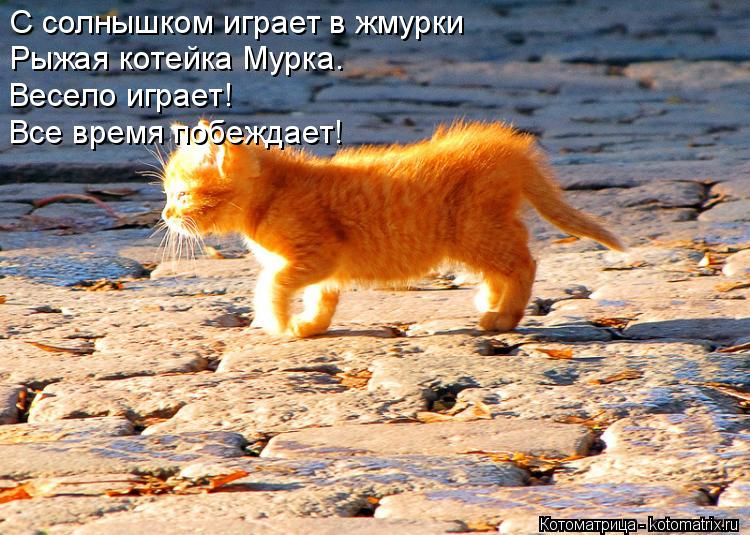 Котоматрица: С солнышком играет в жмурки Рыжая котейка Мурка. Весело играет! Все время побеждает!