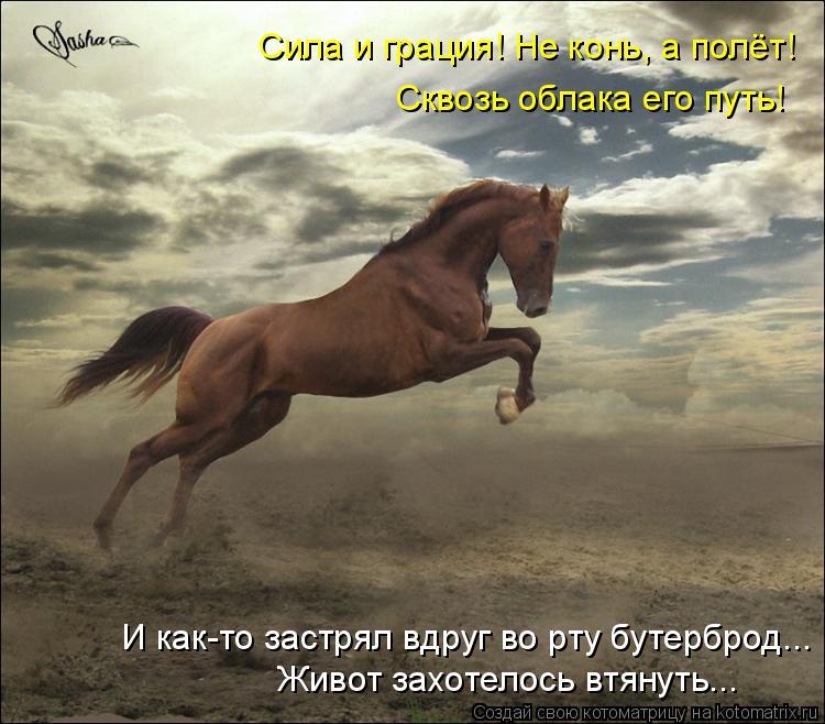 Котоматрица: Сила и грация! Не конь, а полёт! Сквозь облака его путь! И как-то застрял вдруг во рту бутерброд... Живот захотелось втянуть...