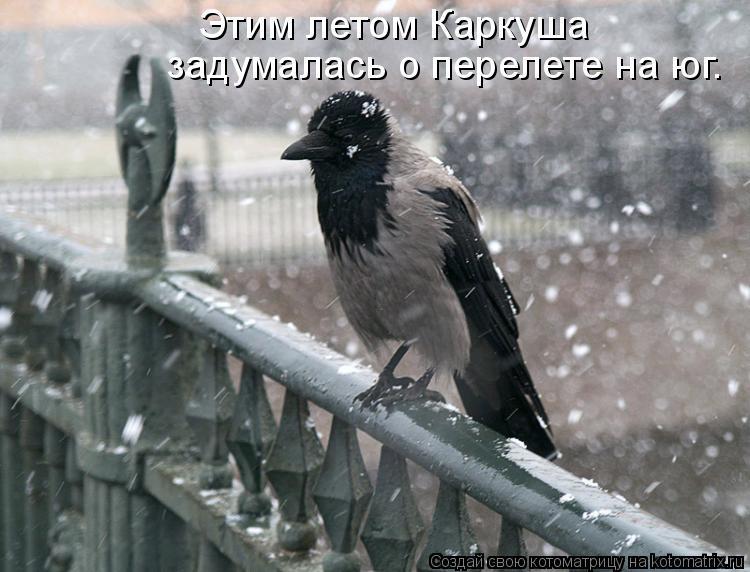 Котоматрица: Этим летом Каркуша задумалась о перелете на юг.