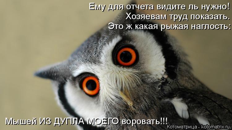 Котоматрица: Ему для отчета видите ль нужно! Хозяевам труд показать. Это ж какая рыжая наглость: Мышей ИЗ ДУПЛА МОЕГО воровать!!!
