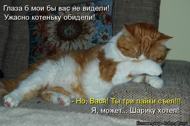 Котоматрица: Глаза б мои бы вас не видели! Ужасно котеньку обидели! - Но, Вася! Ты три пайки съел!!! Я, может... Шарику хотел!