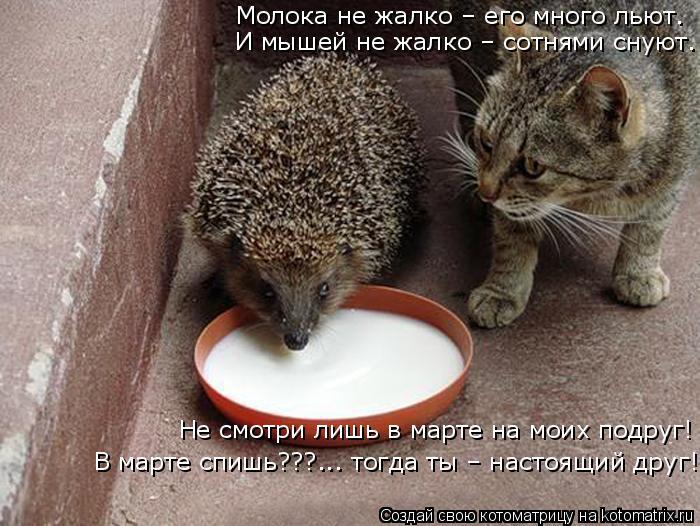 Котоматрица: Молока не жалко – его много льют. Не смотри лишь в марте на моих подруг! В марте спишь???... тогда ты – настоящий друг! И мышей не жалко – сотня