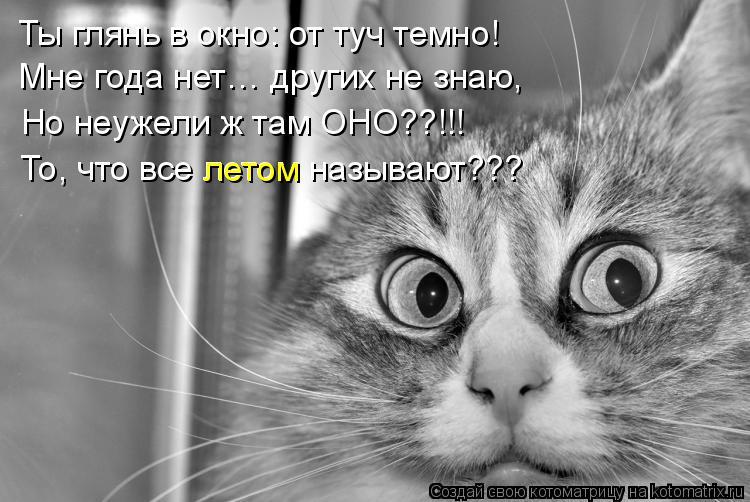 Котоматрица: Ты глянь в окно: от туч темно! Мне года нет… других не знаю, Но неужели ж там ОНО??!!! То, что все летом называют??? летом