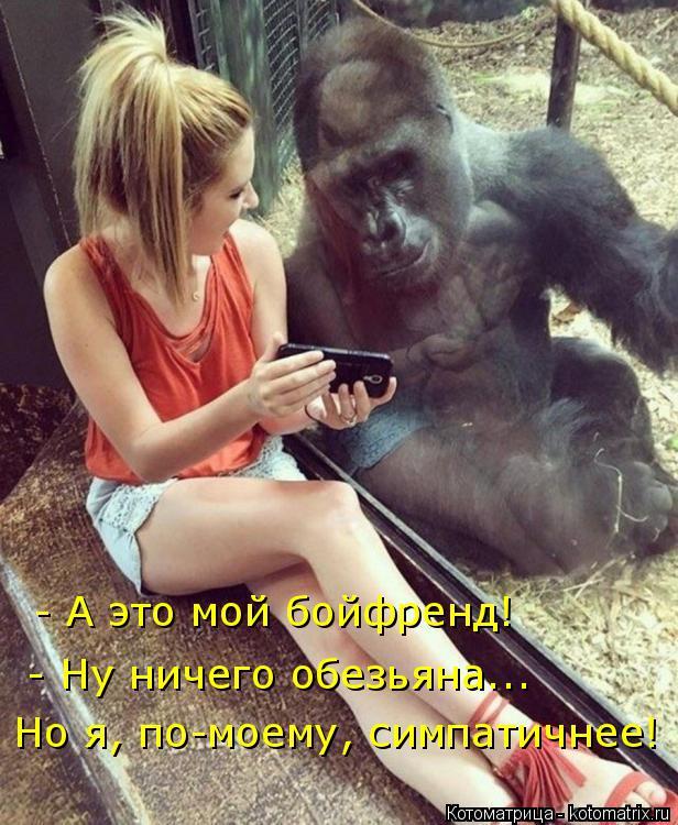 Котоматрица: - А это мой бойфренд! - Ну ничего обезьяна...  Но я, по-моему, симпатичнее!