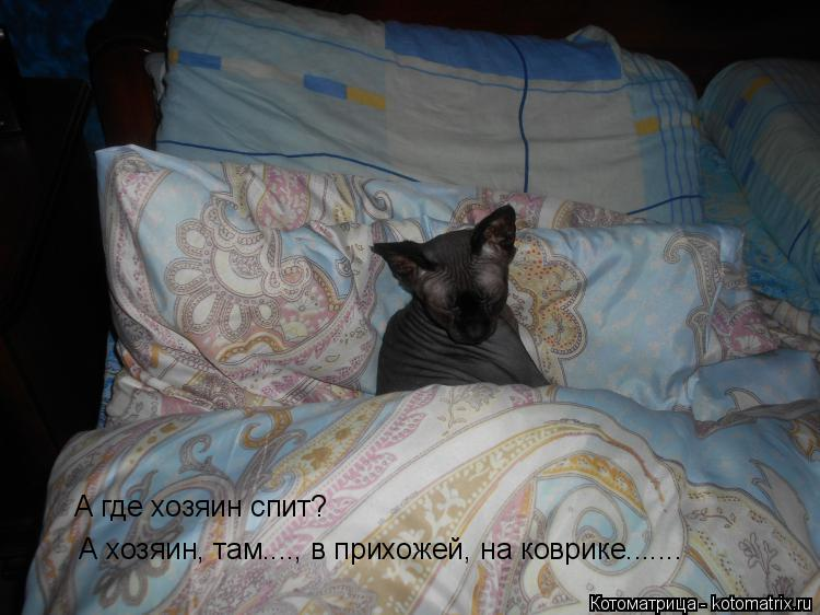 Котоматрица: А где хозяин спит?  А хозяин, там...., в прихожей, на коврике.......