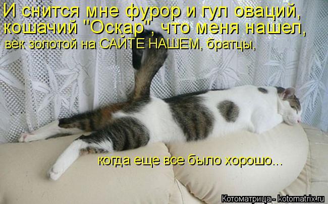 """Котоматрица: И снится мне фурор и гул оваций,  кошачий """"Оскар"""", что меня нашел,  век золотой на САЙТЕ НАШЕМ, братцы,  когда еще все было хорошо..."""