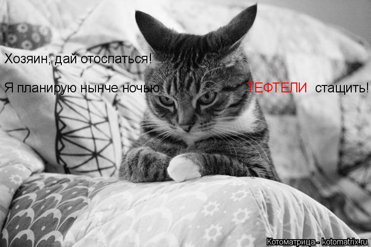 Котоматрица: Хозяин, дай отоспаться! Я планирую нынче ночью ТЕФТЕЛИ стащить!