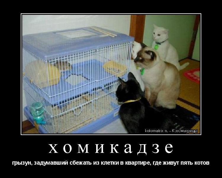 Котоматрица: хомикадзе грызун, задумавший сбежать из клетки в квартире, где живут пять котов