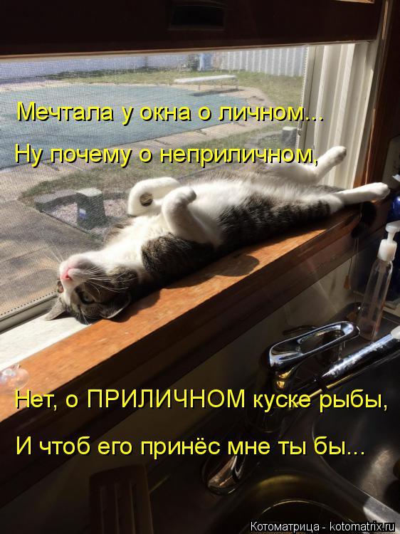 Котоматрица: Мечтала у окна о личном... Ну почему о неприличном, Нет, о ПРИЛИЧНОМ куске рыбы, И чтоб его принёс мне ты бы...