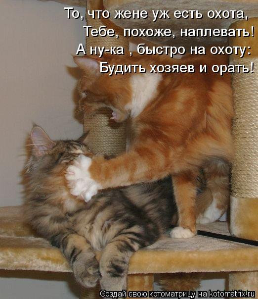 Котоматрица: Тебе, похоже, наплевать! То, что жене уж есть охота, А ну-ка , быстро на охоту: Будить хозяев и орать!