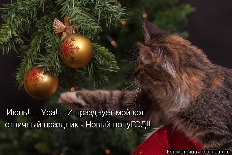 Котоматрица: Июль!!... Ура!!...И празднует мой кот отличный праздник - Новый полуГОД!!