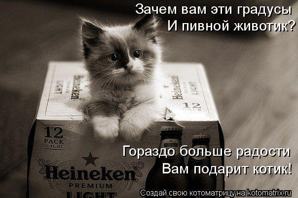 Котоматрица: Зачем вам эти градусы  И пивной животик? Гораздо больше радости Вам подарит котик!