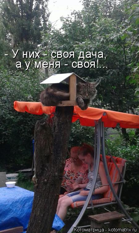 Котоматрица: - У них - своя дача,  а у меня - своя!...