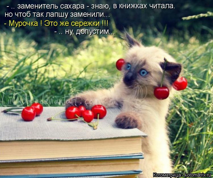 Котоматрица: - .. заменитель сахара - знаю,  но чтоб так лапшу заменили...  - Мурочка ! Это же сережки !!! - .. ну, допустим... в книжках читала.