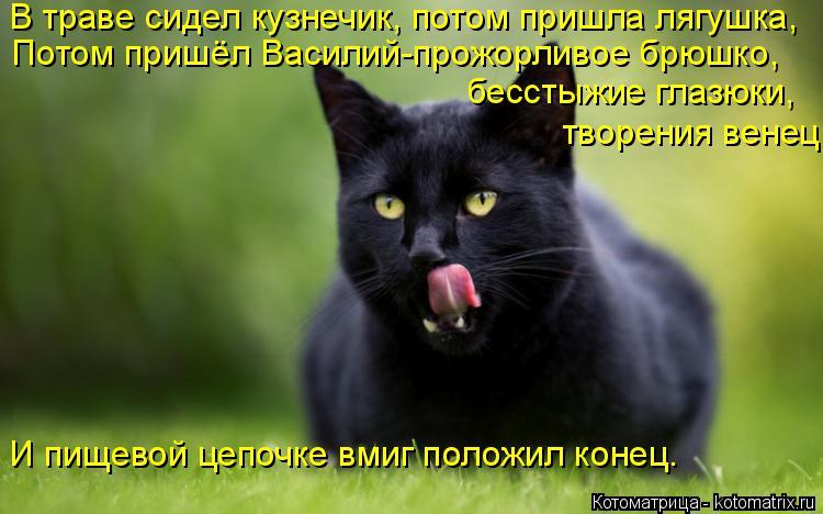 Котоматрица: В траве сидел кузнечик, потом пришла лягушка, Потом пришёл Василий-прожорливое брюшко, бесстыжие глазюки, И пищевой цепочке вмиг положил ко