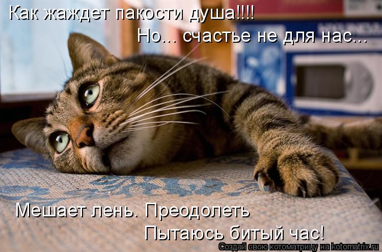 Котоматрица: Как жаждет пакости душа!!!! Но... счастье не для нас... Пытаюсь битый час! Мешает лень. Преодолеть