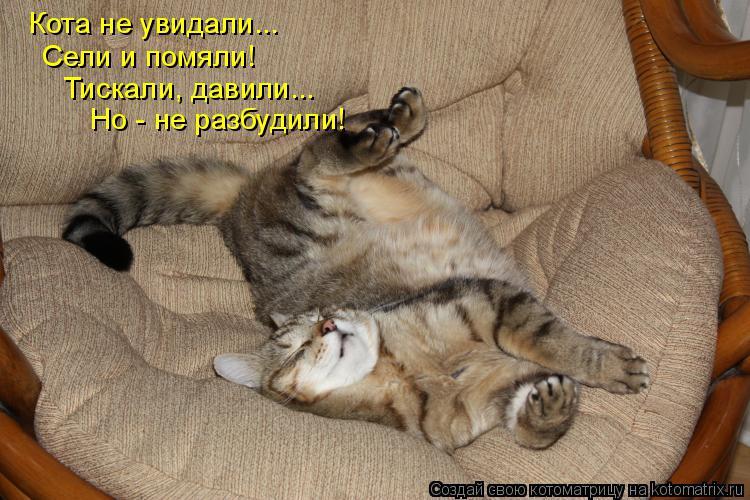 Котоматрица: Кота не увидали...  Сели и помяли! Тискали, давили... Но - не разбудили!