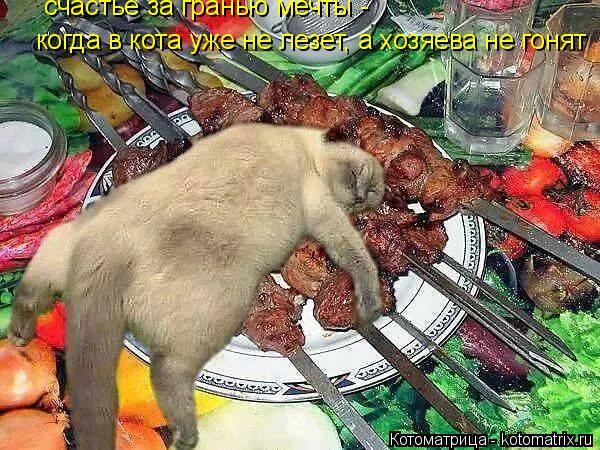 Котоматрица: когда в кота уже не лезет, а хозяева не гонят счастье за гранью мечты -