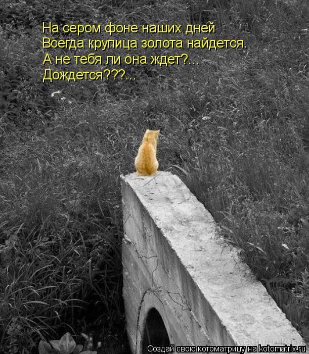 Котоматрица: На сером фоне наших дней Всегда крупица золота найдется. А не тебя ли она ждет?... Дождется???...