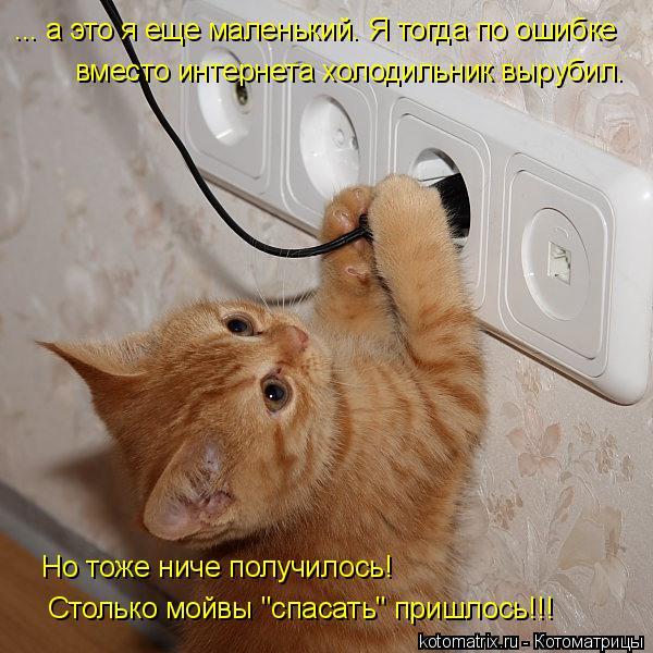 """Котоматрица: ... а это я еще маленький. Я тогда по ошибке  вместо интернета холодильник вырубил. Но тоже ниче получилось! Столько мойвы """"спасать"""" пришлось!!!"""