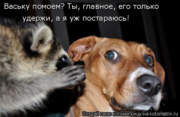 Котоматрица: Ваську помоем? Ты, главное, его только   удержи, а я уж постараюсь!
