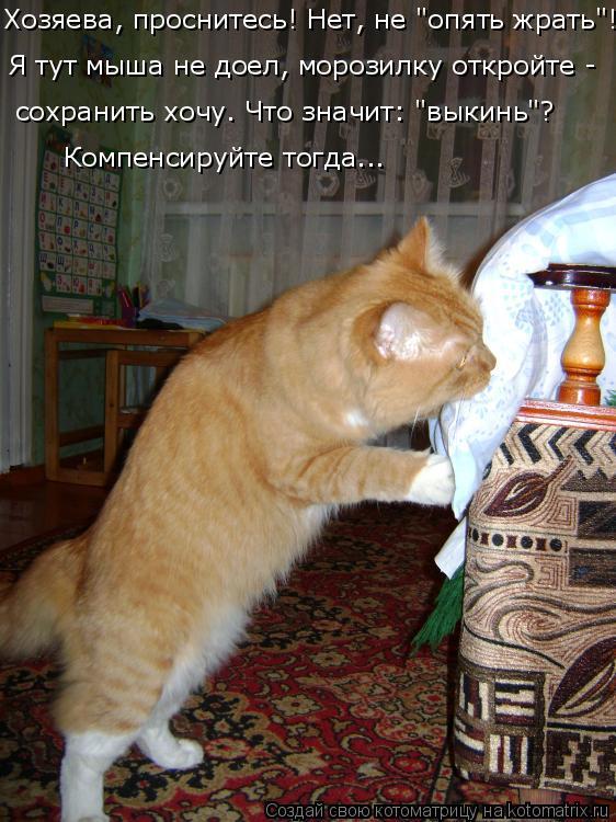 """Котоматрица: Хозяева, проснитесь! Нет, не """"опять жрать""""! Я тут мыша не доел, морозилку откройте - сохранить хочу. Что значит: """"выкинь""""? Компенсируйте тогда..."""