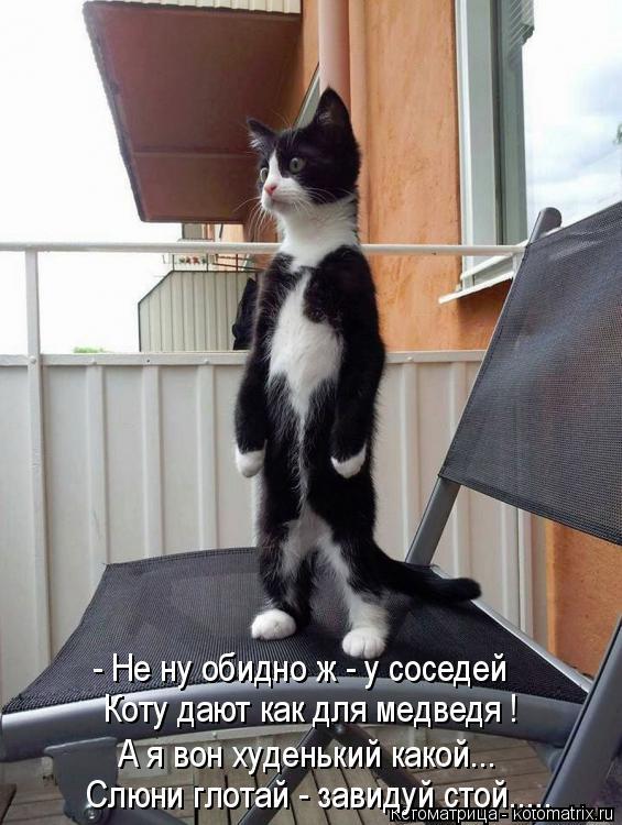 Котоматрица: - Не ну обидно ж - у соседей Коту дают как для медведя ! А я вон худенький какой... Слюни глотай - завидуй стой.....