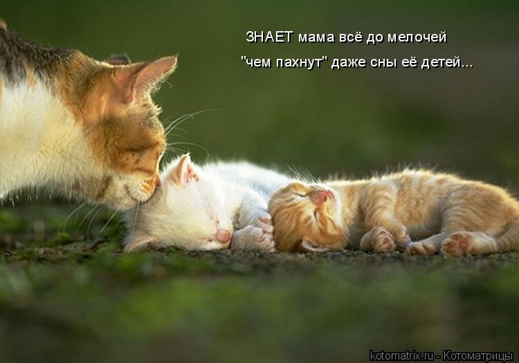 """Котоматрица: ЗНАЕТ мама всё до мелочей """"чем пахнут"""" даже сны её детей..."""