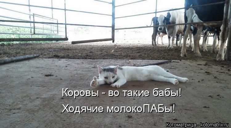 Котоматрица: Коровы - во такие бабы! Ходячие молокоПАБы!