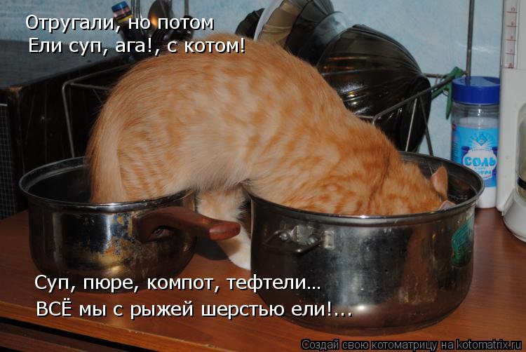 Котоматрица: Отругали, но потом Ели суп, ага!, с котом! Суп, пюре, компот, тефтели… ВСЁ мы с рыжей шерстью ели!...