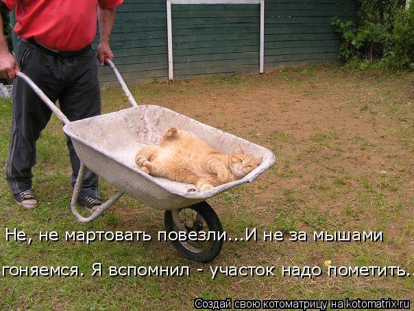 Котоматрица: Не, не мартовать повезли...И не за мышами  гоняемся. Я вспомнил - участок надо пометить...