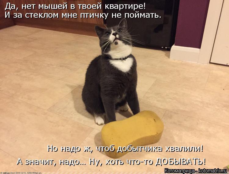 Котоматрица: Да, нет мышей в твоей квартире! И за стеклом мне птичку не поймать. А значит, надо… Ну, хоть что-то ДОБЫВАТЬ! Но надо ж, чтоб добытчика хвалили!
