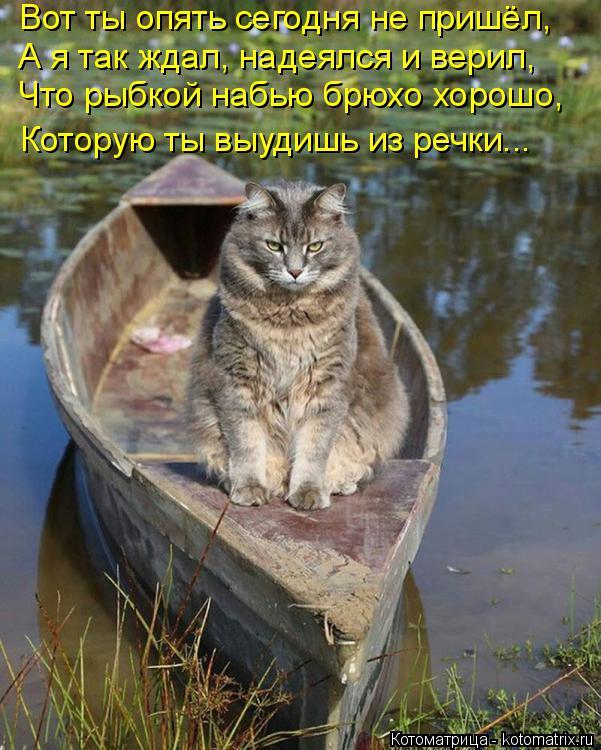 Котоматрица: Вот ты опять сегодня не пришёл,  А я так ждал, надеялся и верил, Что рыбкой набью брюхо хорошо, Которую ты выудишь из речки...